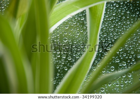 Rain drops on a window glass, with un-sharpen plant in the foreground.