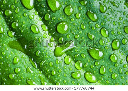 Rain drops on green leaf. High resolution texture