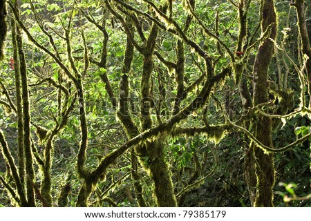 Rain forest canopy with nearly every branch covered in moss - stock photo