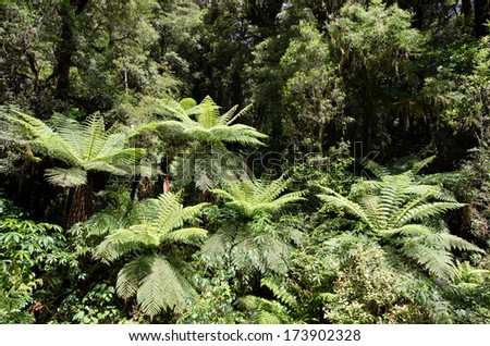 Rain forest in Fiordland, New Zealand - stock photo