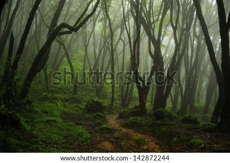 rain forest in nepal 4 - stock photo