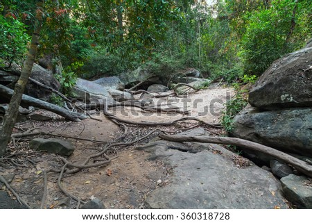Rain Forest, jungle Phnom Kulen National Park in Cambodia kampuchea. - stock photo