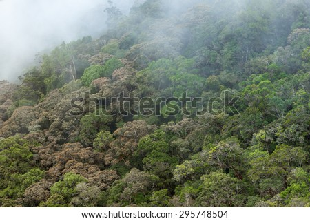 Rain forest of Trus Madi mountain in Sabah, Malaysia - stock photo