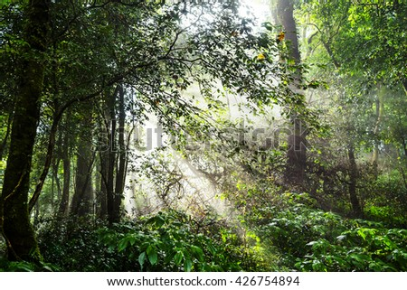 Rain forest on a misty  morning and sunrise. - stock photo