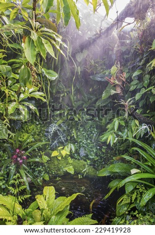 rain in amazon tropical forest - stock photo