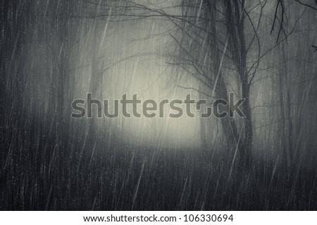rain in dark forest - stock photo
