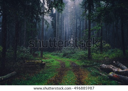 Rain in Forest with fog