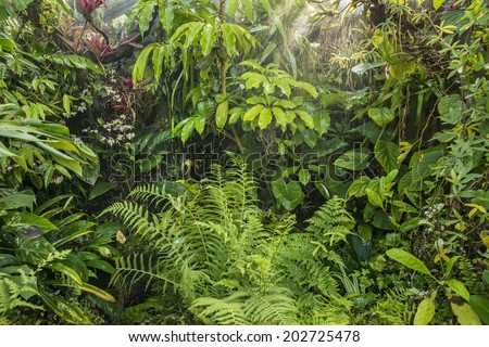 rain in tropical rainforest - stock photo