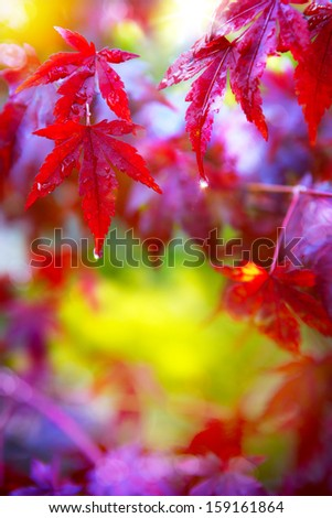 Rain. Wet red autumn leaves - stock photo