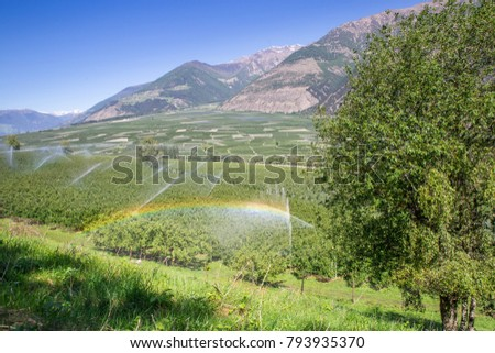 Rainbow above Watering with Sprinklers of Apple Tree Plantation, Italy, Europe