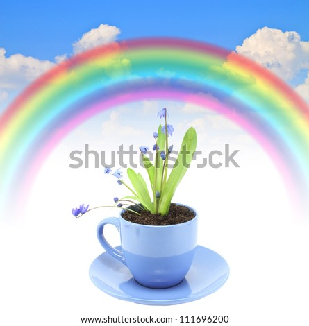 rainbow blue summer sky color Fresh beautiful blue flowers grow in a cup - stock photo