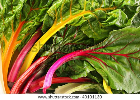 rainbow chard - stock photo