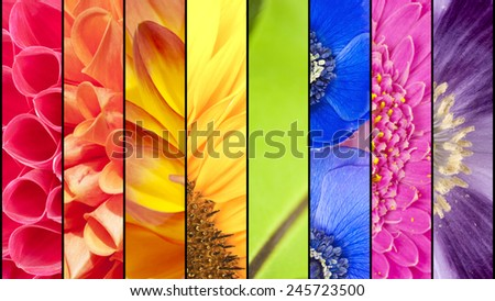 Rainbow collage of red orange yellow green blue pink violet purple colors of Dahlia Sunflower Fern leaf Anemone Windflower Gerbera and Poppy flowers in closeup separated with black strips - stock photo