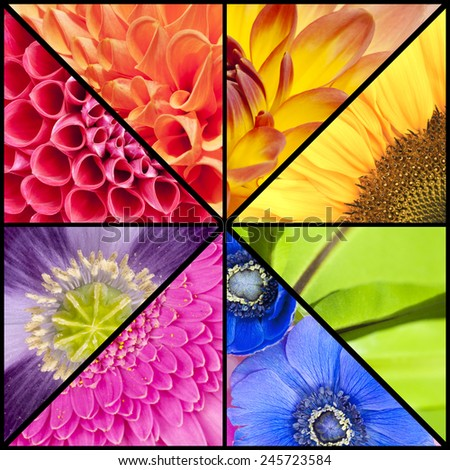 Rainbow collage of red orange yellow green blue pink violet purple colors of Dahlia Sunflower Fern leaf Anemone Windflower Gerbera and Poppy flowers in closeup and in a square frame - stock photo