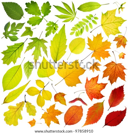Rainbow collection of tree leaves isolated on white background - stock photo