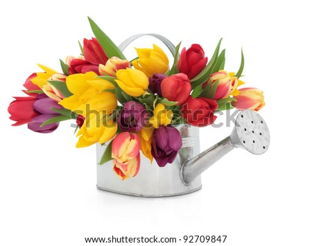 Rainbow coloured tulip flowers in an old metal watering can isolated over white background. - stock photo
