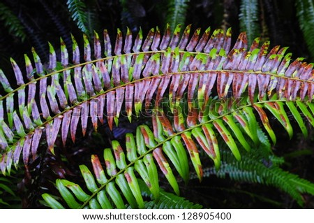 Rainbow Fern 2 - stock photo