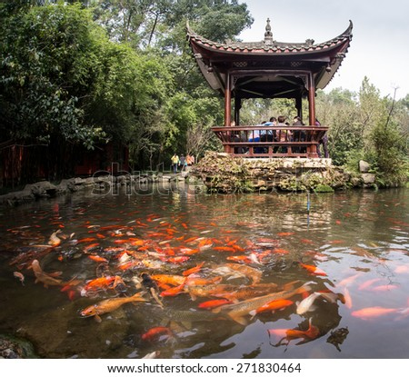 Rainbow Fish in the Chinese pond - stock photo