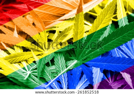 Rainbow Flag on cannabis background. Drug policy. Legalization of marijuana - stock photo
