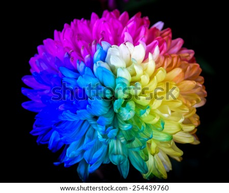 rainbow flower - stock photo
