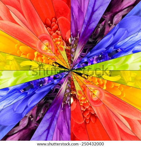 Rainbow Flower Center Symmetric Collage Made from Collection of Various Multi Colored Wildflowers. Parts are Divided into Symmetric pieces. - stock photo