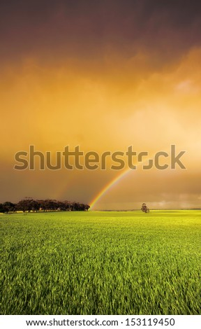 Rainbow in a fresh green field - stock photo