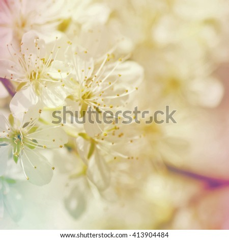 Rainbow lens effect over white spring crab apple blossoms background
