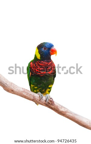 Rainbow Lorikeet on white with clipping path - stock photo