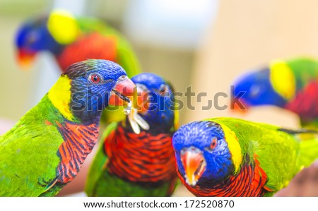 Rainbow Lorikeet Parrot - a very brightly colored parrot species - stock photo