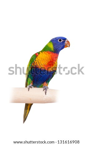 Rainbow Lorikeet (Trichoglossus haematodus), isolated over white background - stock photo