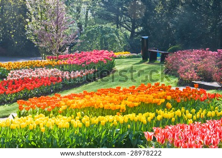 Rainbow of tulips in  the park on  a sunny day spring - stock photo