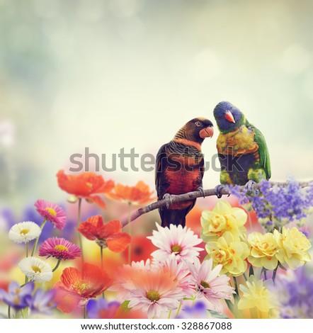 Rainbow Parrots Perch in Flower Garden - stock photo