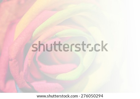 rainbow rose soft blur background in vintage pastel tones - stock photo