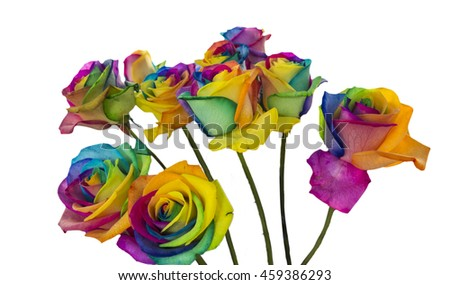 Rainbow roses isolated in white background