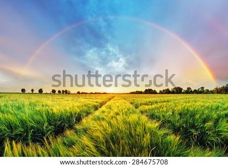 Rainbow Rural landscape with wheat field on sunset - stock photo