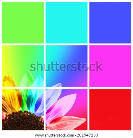 Rainbow sunflower, graphic color squares - stock photo