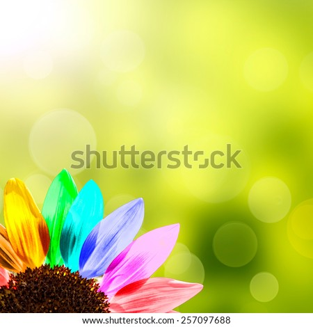 Rainbow sunflower, green background - stock photo