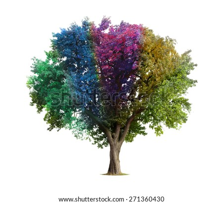 Rainbow tree isolated on white - stock photo