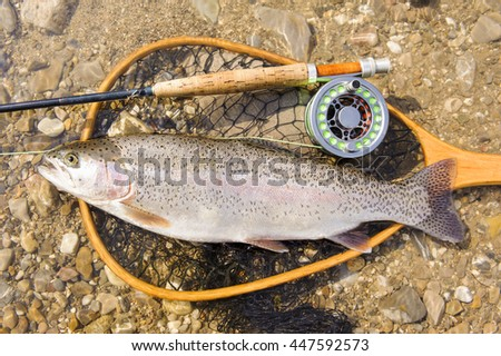 rainbow trout caught by flyfishing