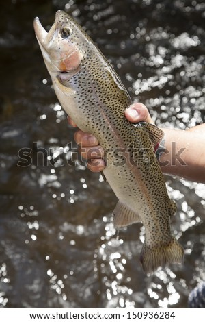 Rainbow Trout grow in flow-through system,northern,Thailand no.3 - stock photo
