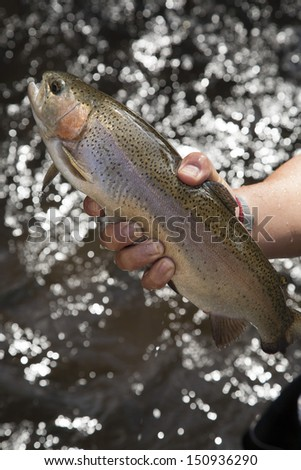 Rainbow Trout grow in flow-through system,northern,Thailand no.1 - stock photo