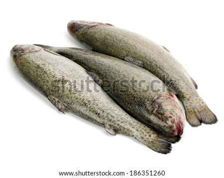 Rainbow trout or Oncorhynchus mykiss on a white background  - stock photo