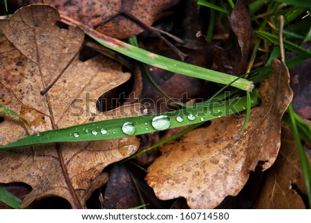 Raindrops on a fallen autumn leaf - stock photo