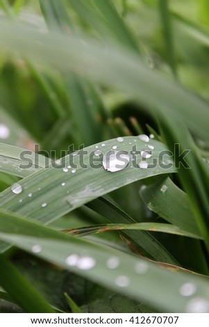 Raindrops on blades of grass.