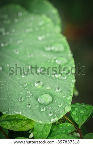 Raindrops on green leaf - stock photo