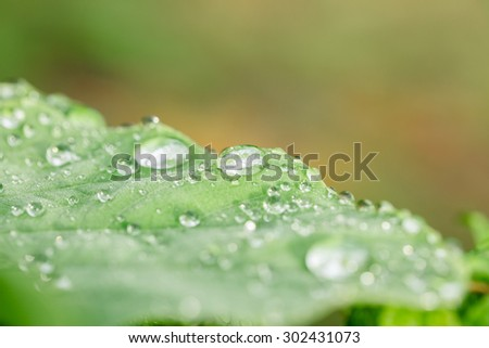 Raindrops on green leaf in rainy season