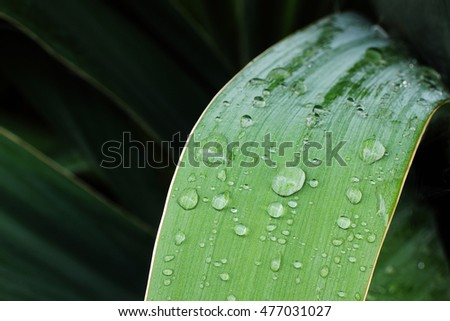 Raindrops on green textured leaf