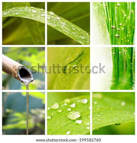 Raindrops on leaves collage - stock photo