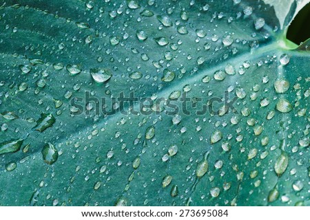 Raindrops on leaves used as nature background - stock photo