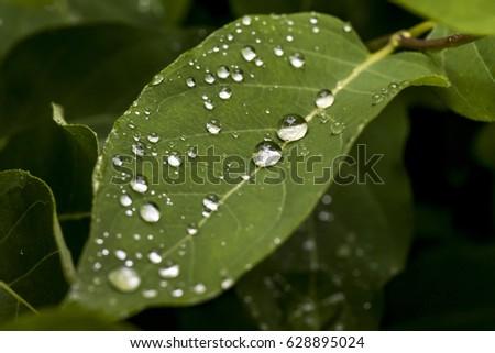 After Spring Shower Green
